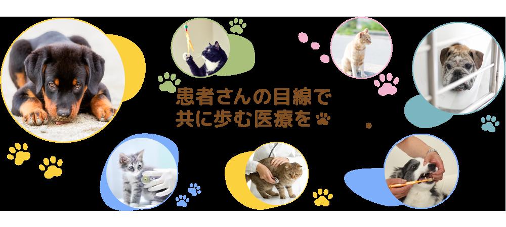 みのわ動物病院 | 地域に愛される動物病院を目指しています。