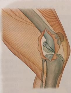 脛骨内旋制動術