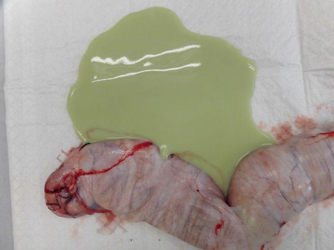 猫子宮 排膿